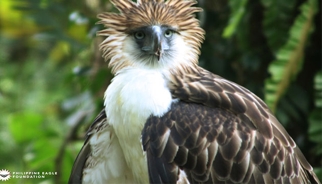 Philippine Eagle Foundation joins Vancouver International Bird Congress to Save Philippine National Bird